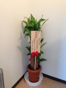 お花 (2)