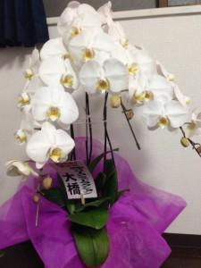 お花 (7)